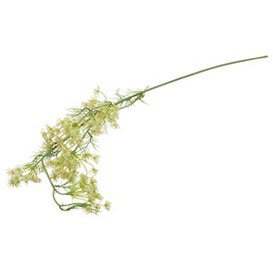 LARGE QUEEN ANN LACE WHITE
